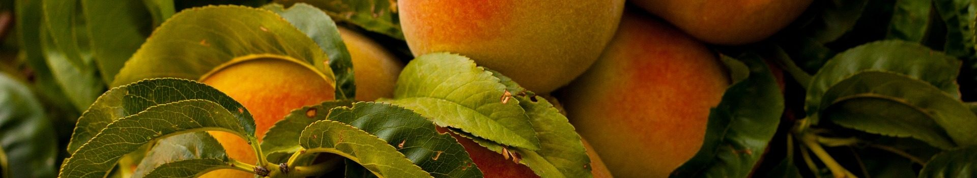 peaches-869386_1920