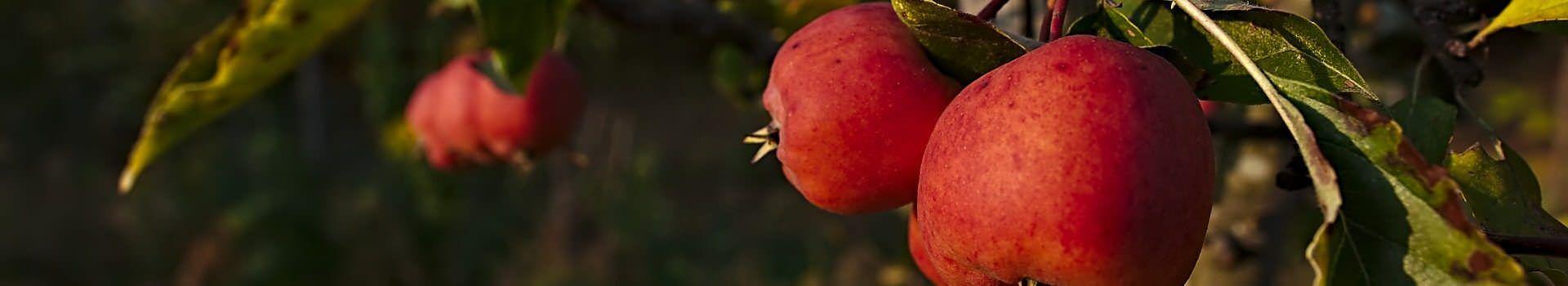 apple-3924150_1920