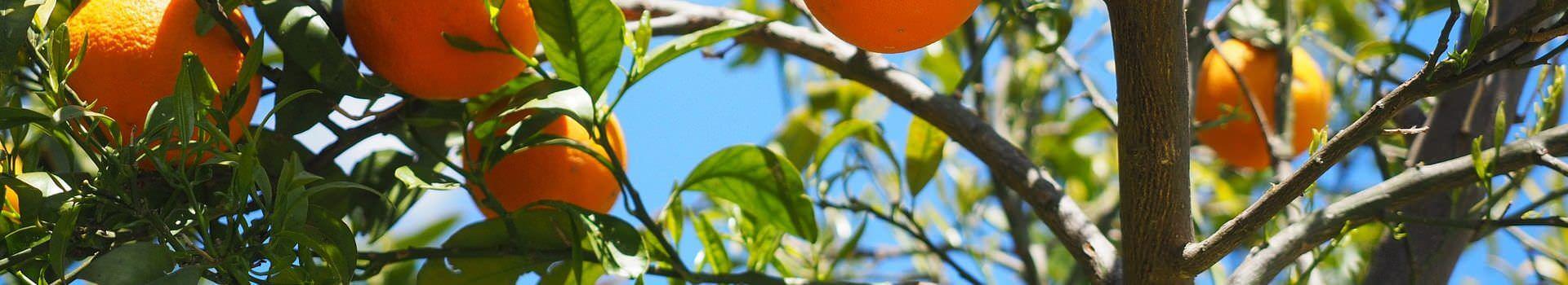 oranges-1117628_1920