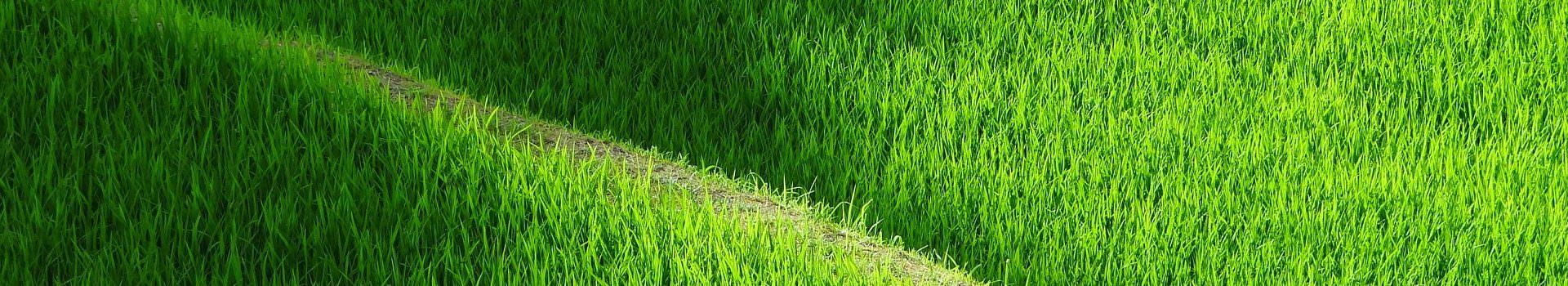 rice-terraces-419770_1920